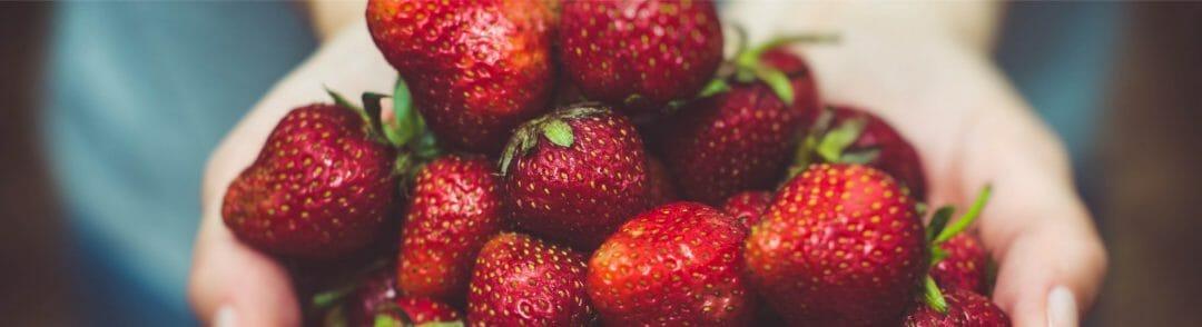 Heaping handful of fresh, ripe strawberries