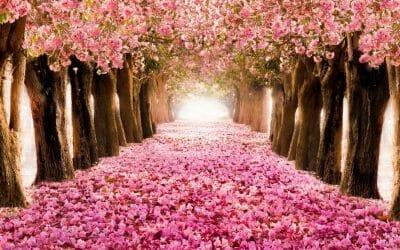 Faites entrer la Lumière dans votre vie grâce à la méditation