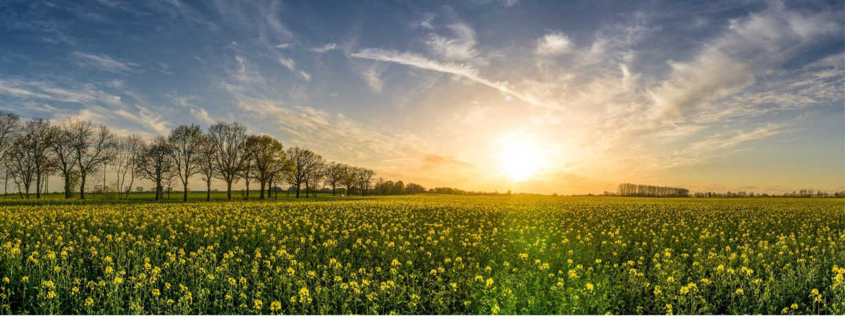 return-spring-Rajinder-Singh