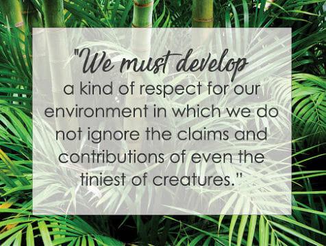 bamboo respect life Rajinder Singh